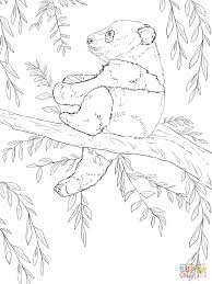 baby panda sits on tree coloring page free printable coloring pages