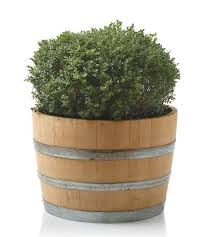Half Barrel Planters by 40 Best Wine Barrel Planters Images On Pinterest Wine