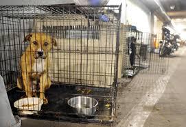 new kennel planned for bethlehem u0027s stray pups lehighvalleylive com