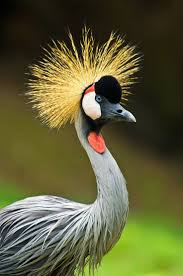 69 best cranes images on pinterest crane google search and