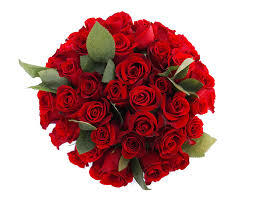amazon com 50 farm fresh red roses bouquet by justfreshroses