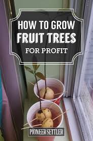 214 best trees images on pinterest fruit trees pecans and