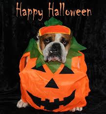halloween dog costumes u2013 baggybulldogs