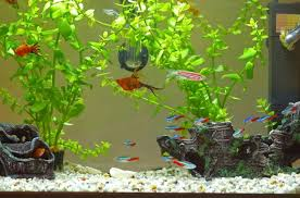 How to Safely Clean Your Tank and Aquarium Decorations