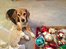 309 best beagle friendzy images on beagles friends