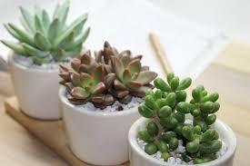 Office Plants Modern Plants Indoor Artenzo