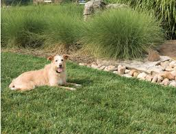 best long range wireless dog fences
