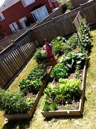 backyard vegetable gardens picmia