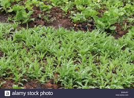 best plants for san diego how does your vegetable garden grow by