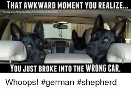 German Shepherd Memes - thatawkward moment you realize the german shepherd dag community on
