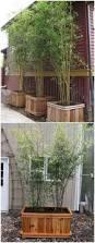 backyards wondrous backyard bamboo backyard pictures backyard x