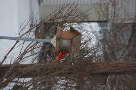 winter bird feeding iowa wildlife federation