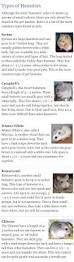 Garden Rodents Types The 25 Best Types Of Rats Ideas On Pinterest Concept Of