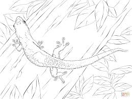 gecko coloring pages eson me