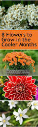 8 flowers to grow in the cooler months flower gardens and flowers