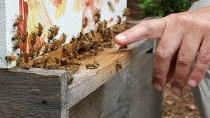bees the next backyard chicken in charlotte cover story