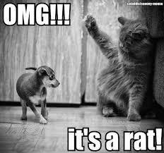 Rat Meme - its a rat cat meme