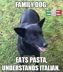 Australian Memes - italian australian memes stuff pinterest australian memes