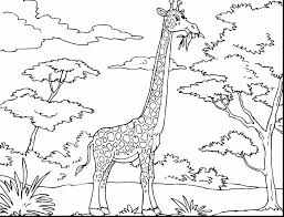 incredible giraffe coloring pages with giraffe coloring page