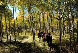 rocky mountain forests are dying report finds blaming climate