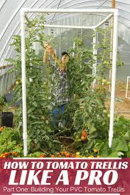 build your tomato trellis gardening ideas pinterest tomato
