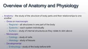 Anatomy And Physiology Coloring Workbook Cells And Tissues Answers Introduction Of Anatomy Images Learn Human Anatomy Image