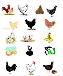 24 personalized egg carton labels free shipping backyard chickens