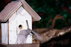 What Height To Hang A Picture How To Hang A Bird House Mounting A Nesting Box