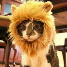 cat halloween picture amazon com evinis pet costume cosplay lion mane wig cat