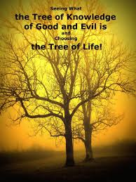 seeing what the tree of knowledge of and evil is and choosing