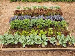 edible landscaping growing your own food raised bed backyard