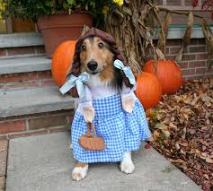 Toto Halloween Costume Sheltie Nation Archive Costume Shelties