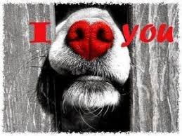 sloth valentines day card valentines dogs archives dogsjar