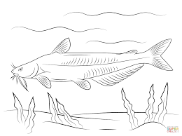 blue catfish coloring page free printable coloring pages