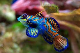 top freshwater aquarium fish aquarium design ideas