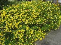 exotic shrubs the trees u0026 flowers of whangarei
