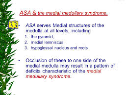Pyramids Of The Medulla Fundamental Neuroscience For Ppt Video Online Download