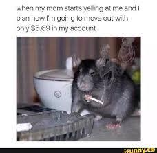 Rat Meme - featured ifunny