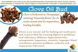 uses of clove oil ayurvedic oils