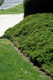 Landscaping Ideas For Slopes Landscaping Ideas For Front Yard Hill Fleagorcom