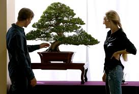 lexus dealership escondido restaurant the beauty of bonsai on exhibit in escondido the san diego union