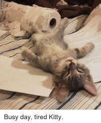 Tired Cat Meme - busy day tired kitty kitties meme on me me