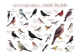 Rhode Island birds images Rhode island backyard birds field guide art print watercolor jpg