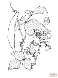 beans coloring pages inside bean coloring page eson me