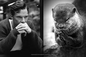 Cumberbatch Otter Meme - why everyone is in love with benedict cumberbatch vox
