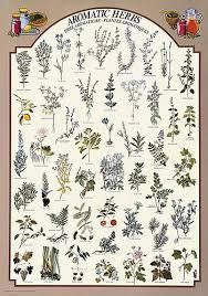 herb chart aromatic herbs chart