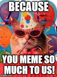Celebration Meme - cat celebration imgflip