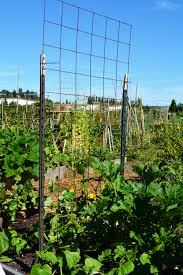 p patch vegetable gardening our family u0027s experience