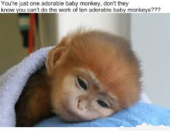 Baby Monkey Meme - you re just one adorable baby monkey don t they know you can t do