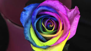 different color roses rainbow roses